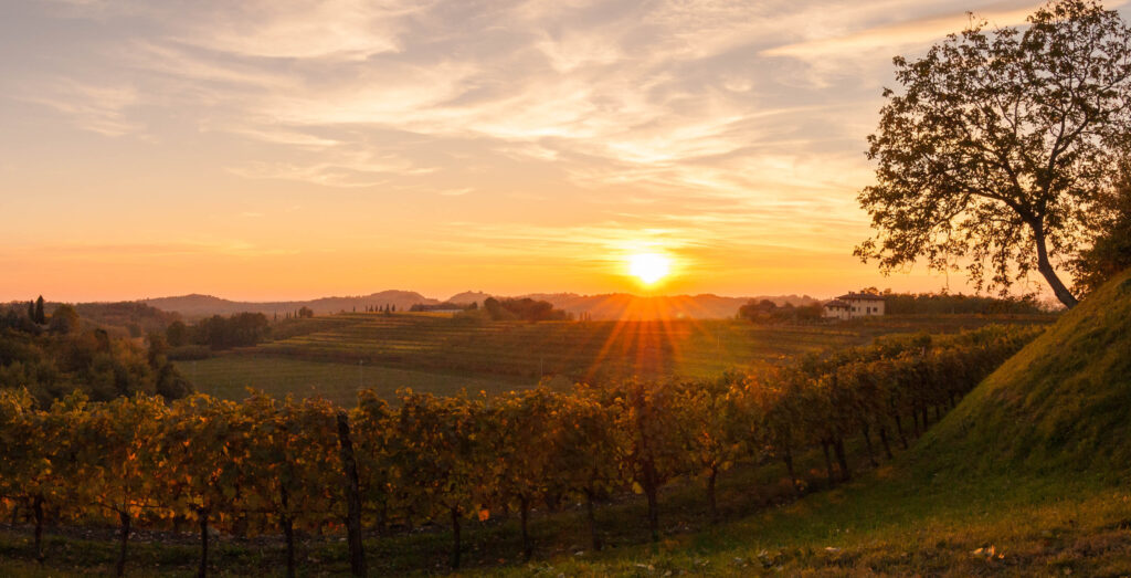 Vineyard,Landscape,At,Sunset,In,Autumn,In,The,Italian,Countryside.